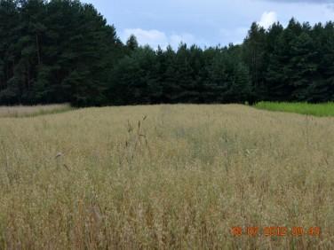 Działka rolna Knyszyn