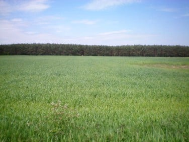 Działka rolna sprzedam