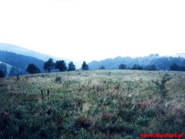 Działka siedliskowa Gołaczów