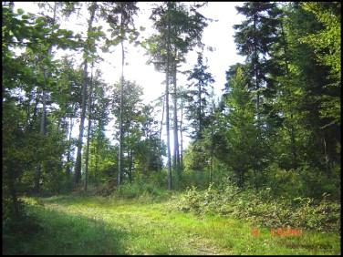Działka leśna Szygówek