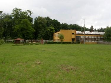 Lokal Laski