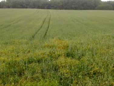 Działka rolna Iława