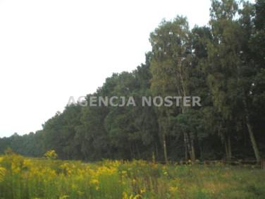 Działka leśna Kowale Oleckie
