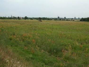 Działka budowlano-rolna Stare Kurowo