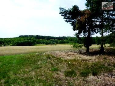 Działka Olejnica