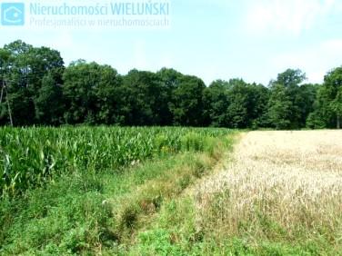 Działka rolna Golędzinów