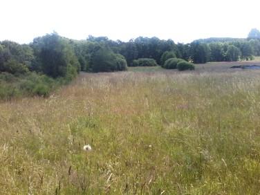 Działka rolna Łebień