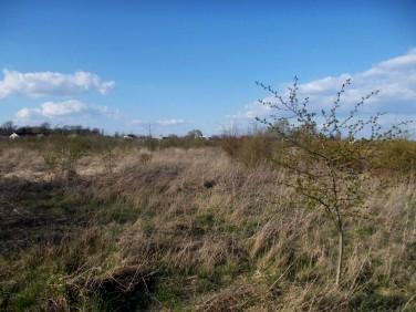Działka rolna Kobylin