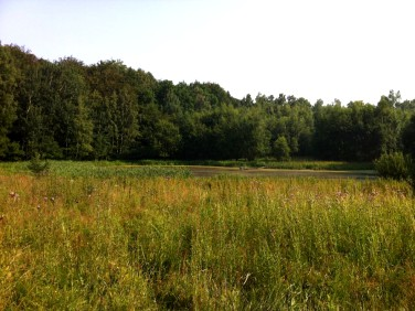 Działka siedliskowa Rogowo