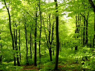 Działka leśna Sarnówek Mały