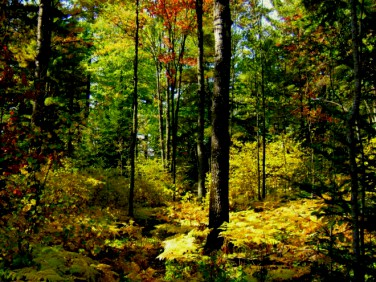 Działka leśna Otok