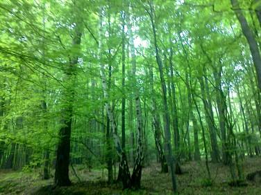 Działka leśna Tarnawa Dolna