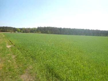 Działka Sarbiewo