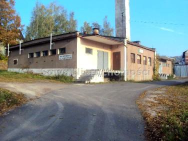 Lokal Jedlina-Zdrój