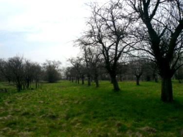 Działka budowlano-rolna Bystrzyca Dolna
