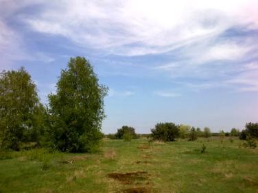 Działka rolna Wojcieszyn